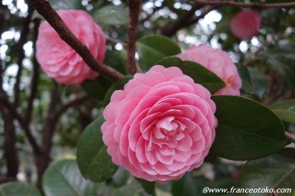 六義園の素敵な花