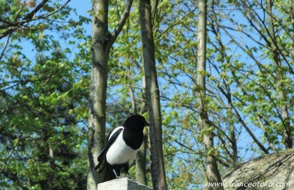フランス 鳥