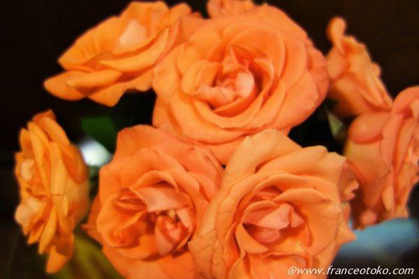 オレンジ 薔薇