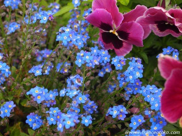 花 ブルー