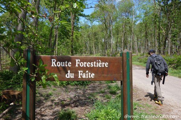 フランスの森