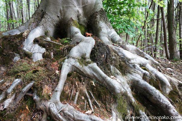 木の根 芸術的
