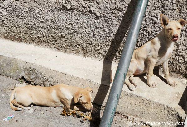 イタリア 犬