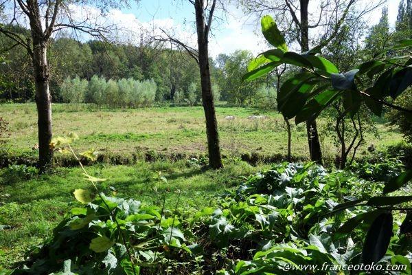 フランス 自然 公園