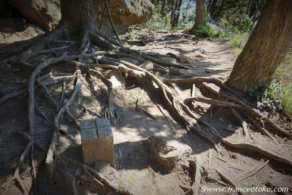 木の根 神秘的