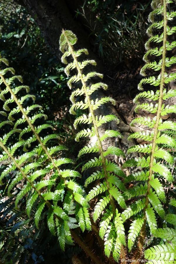 鎌倉 植物