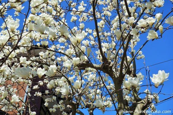 日本の木 花