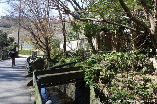 鎌倉 自然