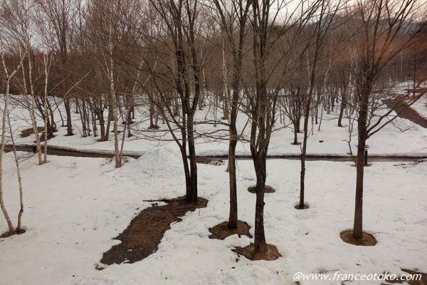 富良野 雪景色