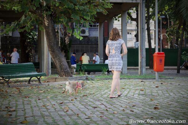 ブラジル 犬