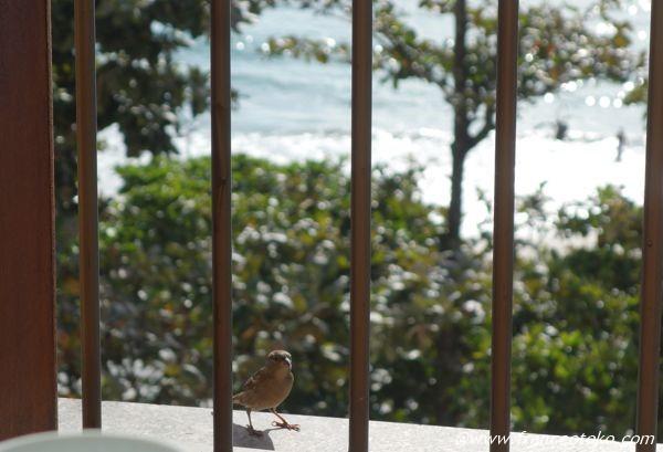 ブラジル 野鳥