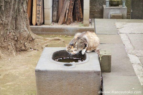 きれいな猫