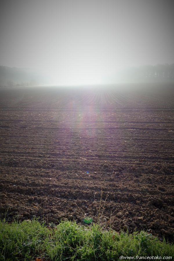 フランス 畑