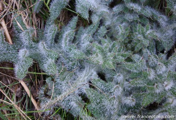 不思議植物