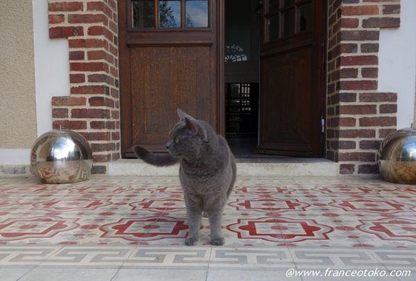 フランス かわいい猫