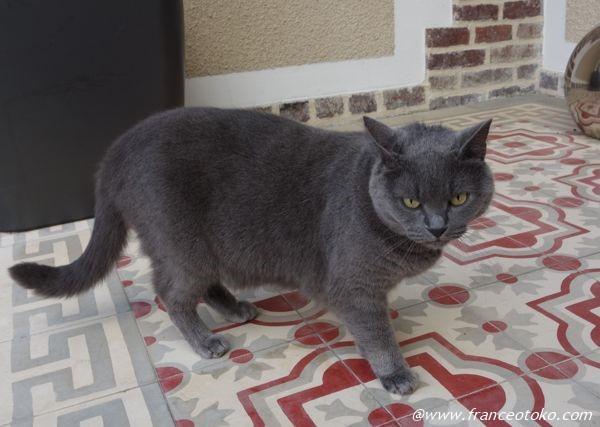 フランス猫