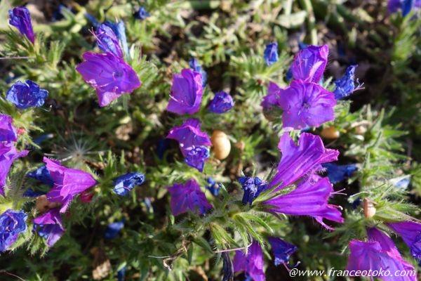 花 イタリア
