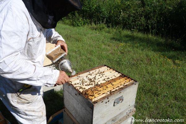 蜂の育て方