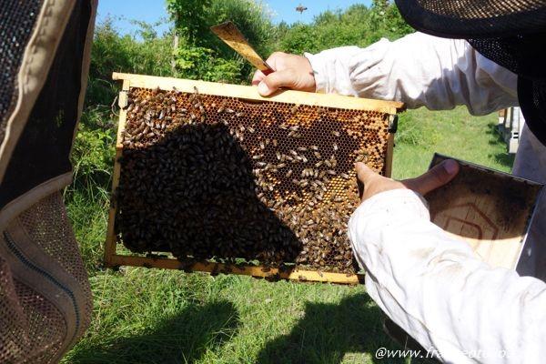 ハチミツの作り方