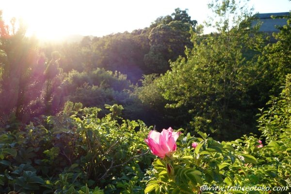フランス きれいな夕日