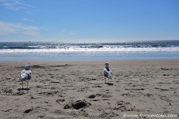 スティンソンビーチ サンフラン
