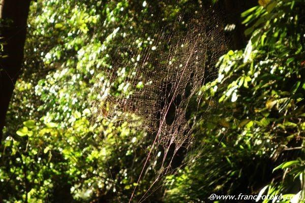 蜘蛛の巣 きれい