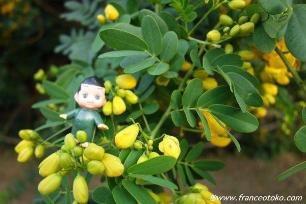スポック 植物
