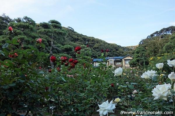 鎌倉文学館 庭園