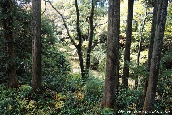 La Petite Porte - 瀬々らぎの森