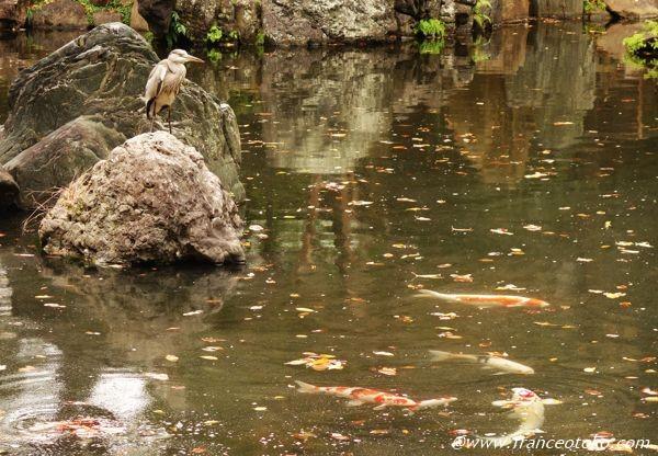 靖国神社 庭園