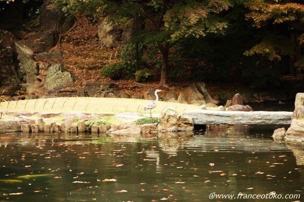 靖国神社 サギ
