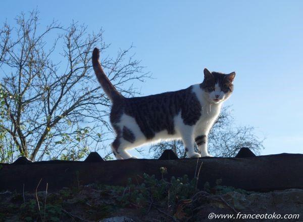 猫 フランス