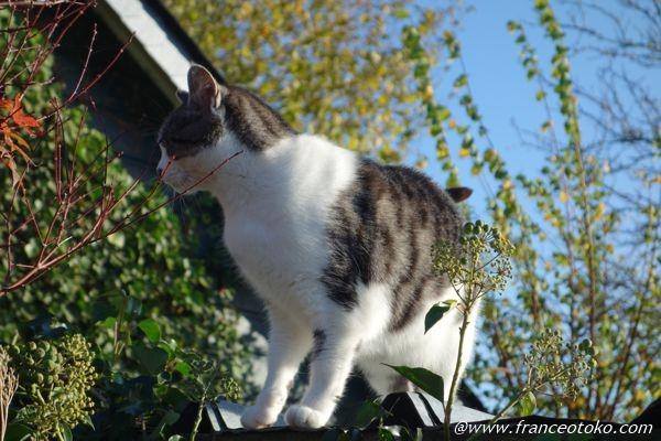 猫 フランス ノルマンディー