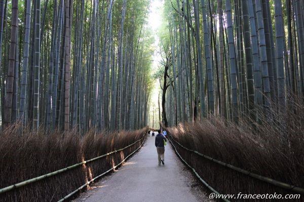 竹林 嵐山