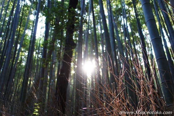 嵐山・嵯峨野の観光