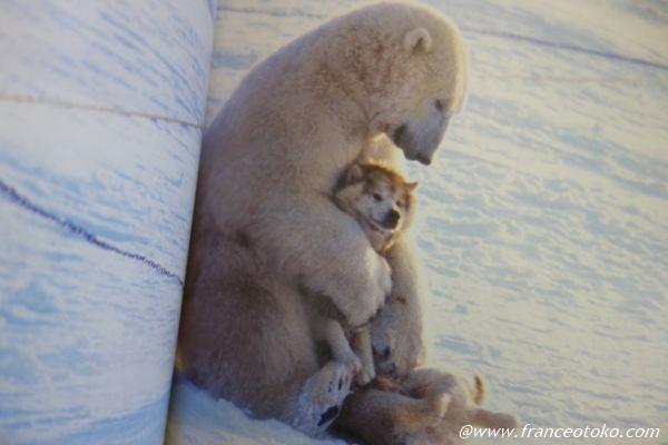 シロクマ 犬を抱く
