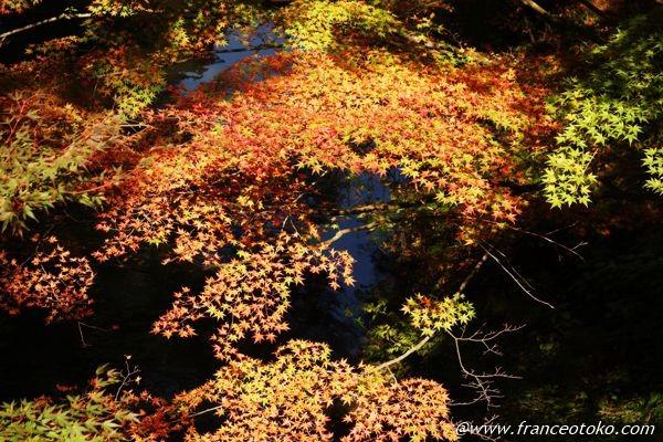 紅葉 石川県