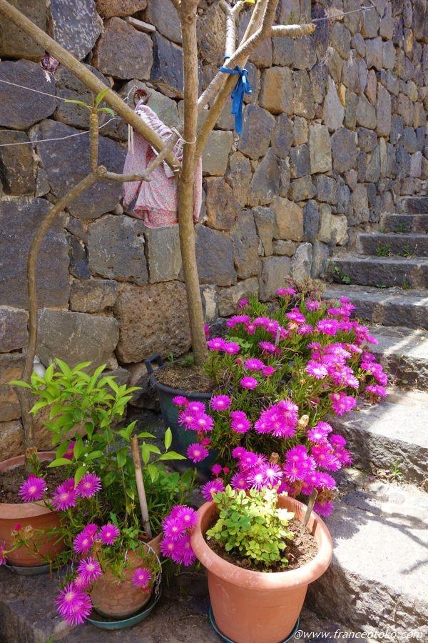 シチリア 花