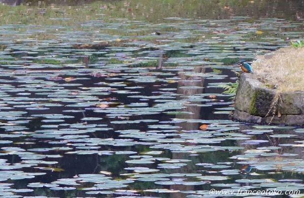 小石川後楽園 鳥