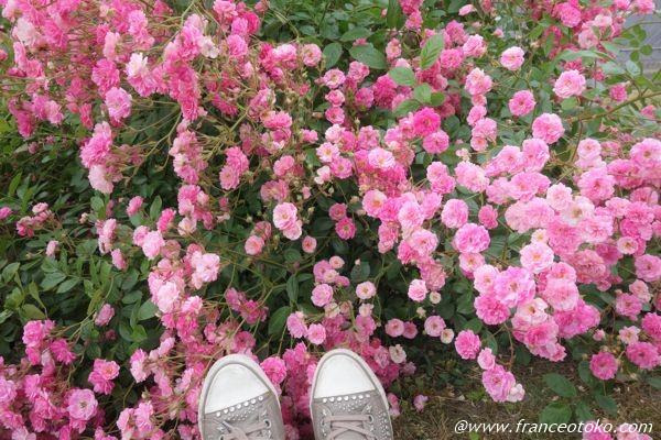 ピンク バラ パリ