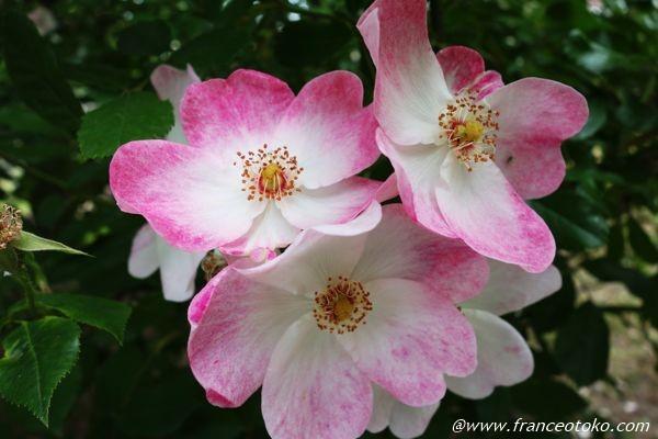 ライレローズ L'Haÿ-les-Roses