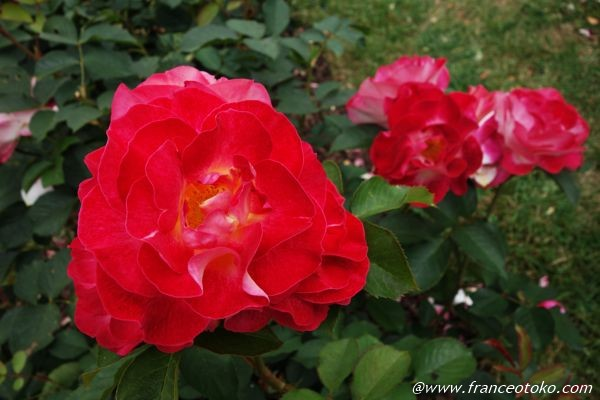 L'Haÿ-les-Roses パリ