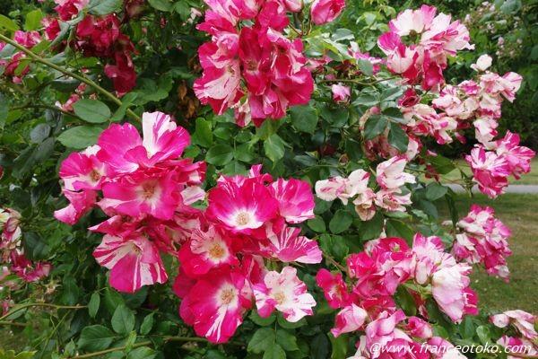 L'Haÿ-les-Roses パリのバラ園
