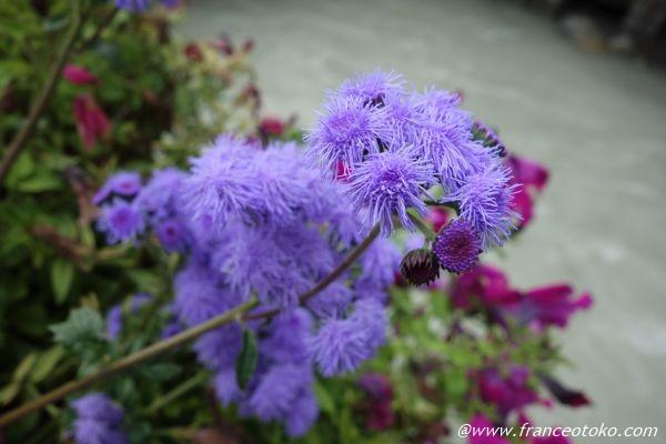 シャモニー 花