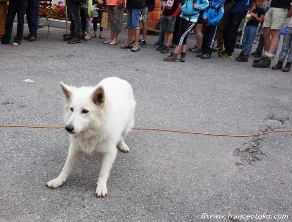 白い 大きい犬