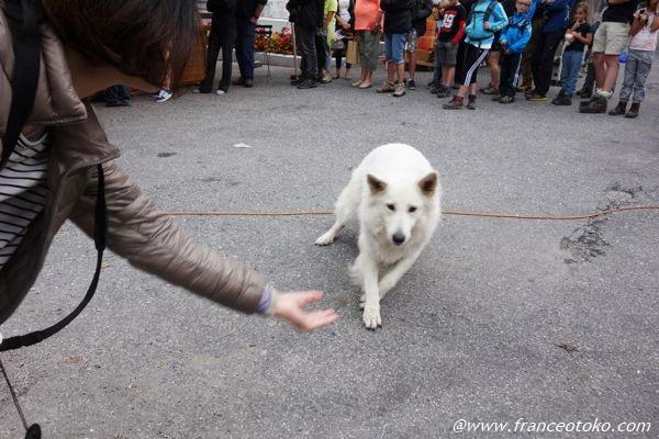 フランス でかい犬