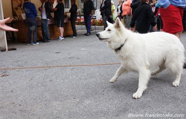 白い犬 フランス