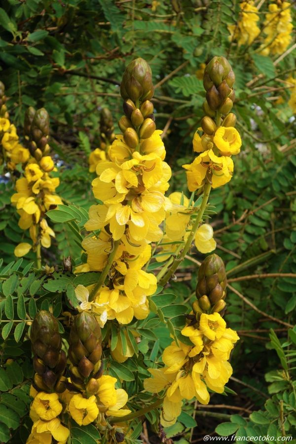 ロサンゼルス 植物