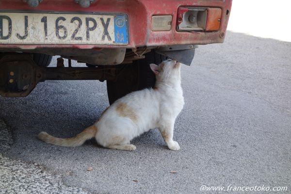 イタリア 猫