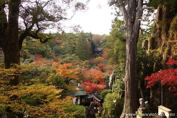石川県小松市 紅葉スポット